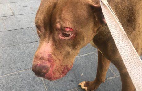 אדם שהתעלל בכלבו נעצר; הכלב נשלח לטיפול רפואי