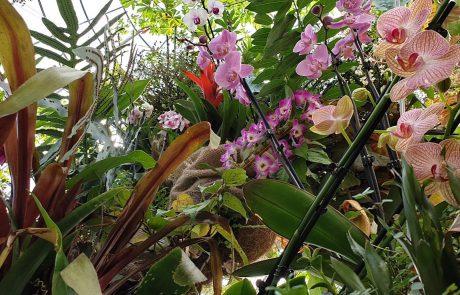 הטבע הוא הרופא הטוב ביותר: פסטיבל צמחי מרפא בגן הבוטני