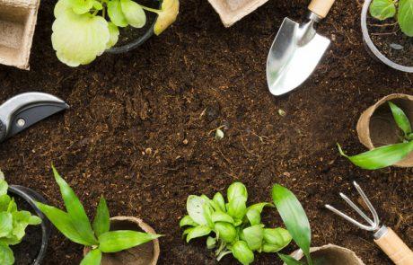 אתם בוחרים איך לעצב את הגינה שלכם